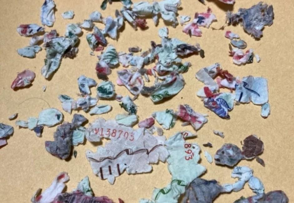 五倍券丟洗衣機「攪爛成紙屑」怎麼辦?1988解答:這3情況有得救