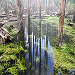 南投水漾森林