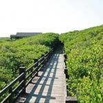 新竹新豐紅樹林生態保護區