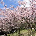 台北陽明山花季