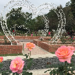 士林官邸玫瑰季