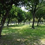 野餐/大安森林公園