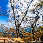 宜蘭太平山山毛櫸國家步道