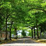 野餐/南投中興新村
