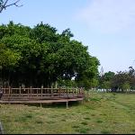 野餐/衛武營都會公園